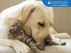 Tips Sukses Berbisnis Jasa Penitipan dan Perawatan Hewan