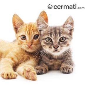 Perawatan Kucing Mahal 3669c9e60e