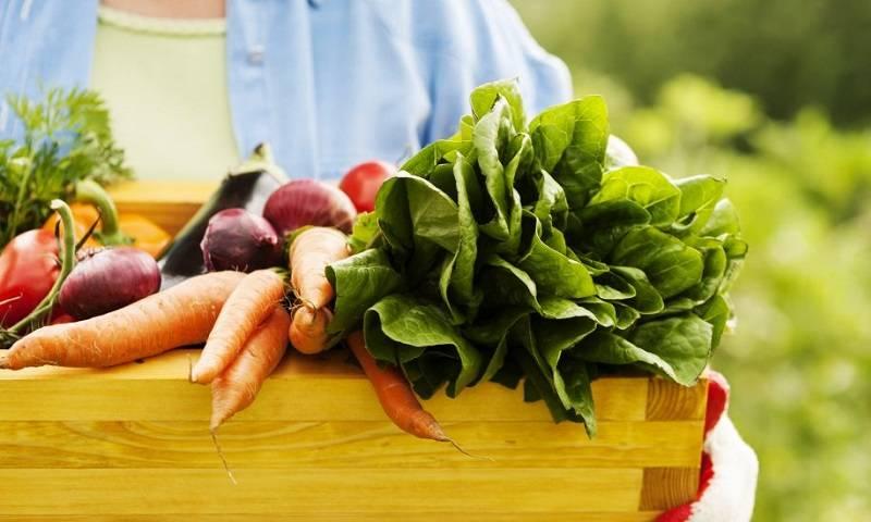 organic food.jpg