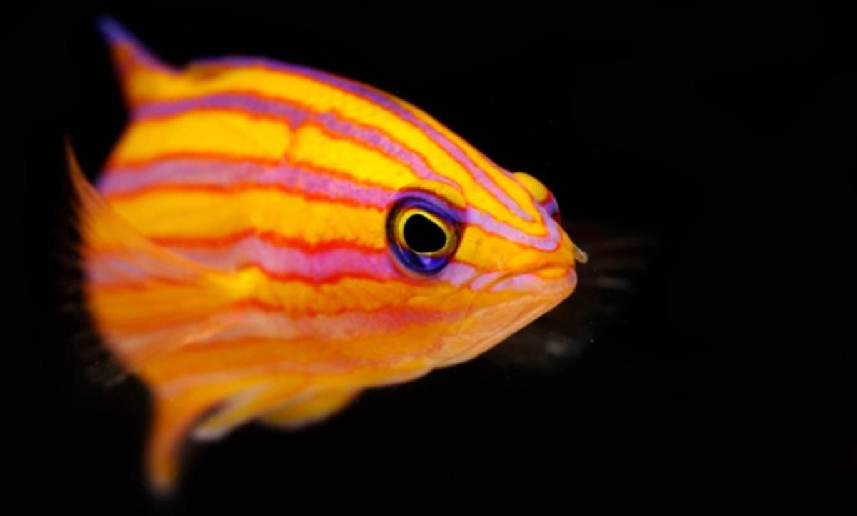 Jenis Ikan Gambar Hias Bermotif Hewan Langka Dan Super Indah Ini Dia 10 Jenis Ikan Hias Termahal Di Dunia Cermati Com
