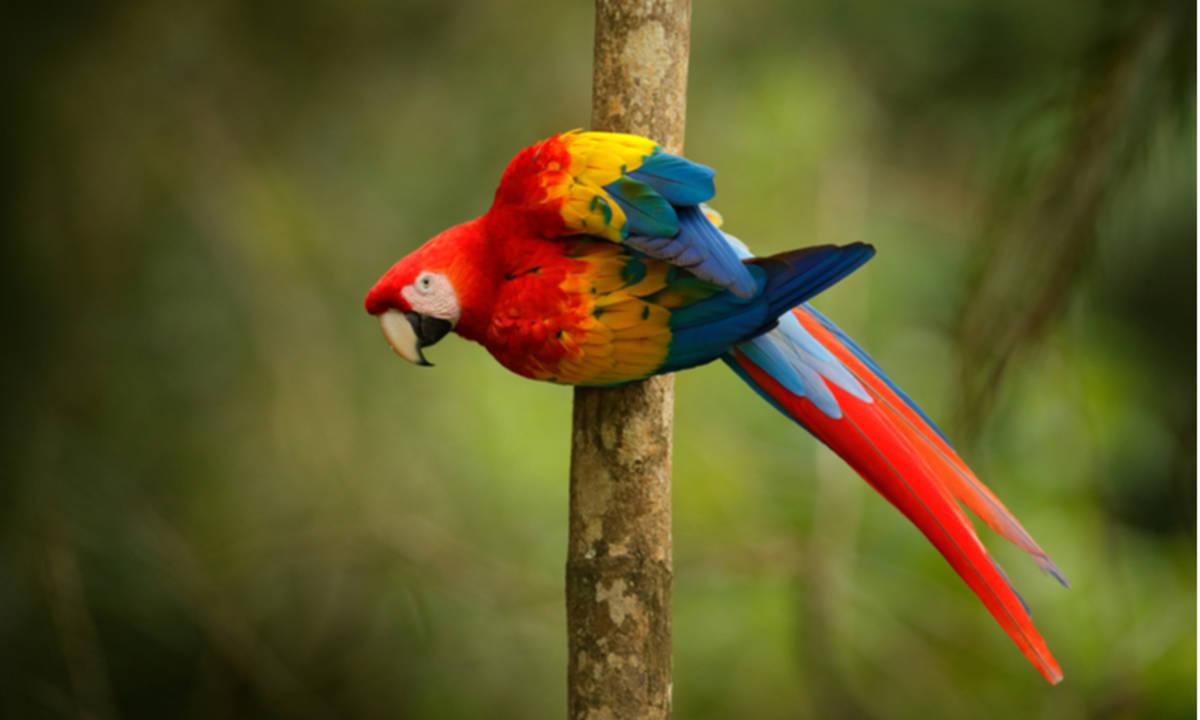 Inilah Rahasia Kepintaran Dan Harga Burung Beo Yang Luar Biasa Cermati Com