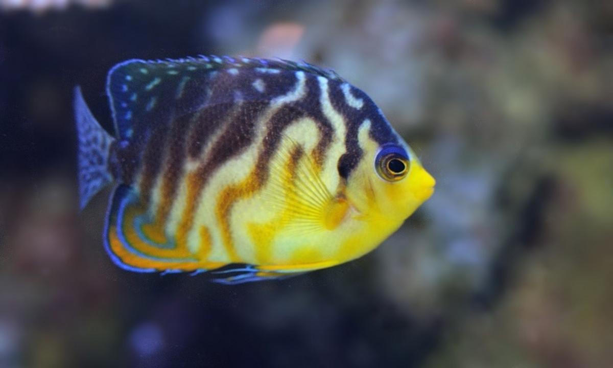 Unduh 540 Koleksi Gambar Ikan Hias Termahal Di Dunia HD Gratis
