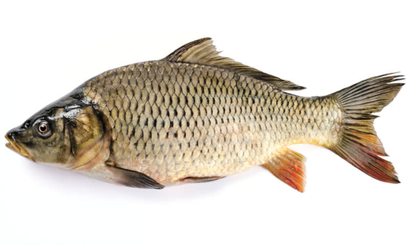 Budidaya Ikan Mas Ternyata Memiliki Peluang Profit Yang Tinggi Ini Penjelasannya Cermati Com