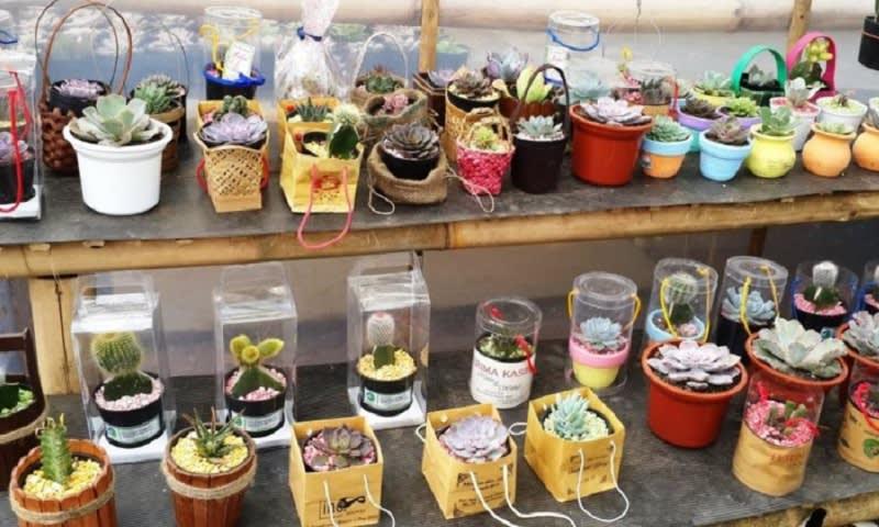 souvenir tanaman