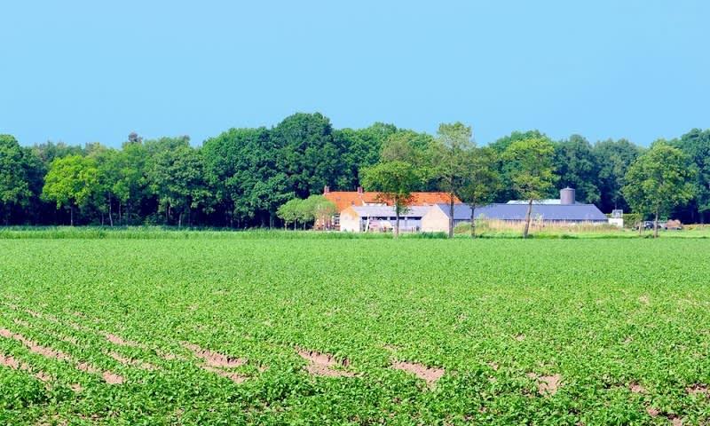Investasi Agrobisnis