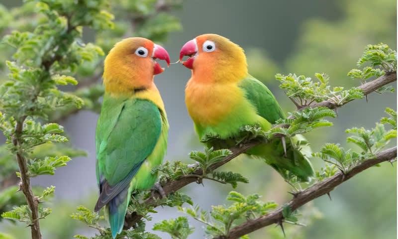 Inilah Jenis Burung Kicau Paling Populer Diikutkan Lomba Dan Dibanderol Hingga Belasan Juta Rupiah Cermati Com