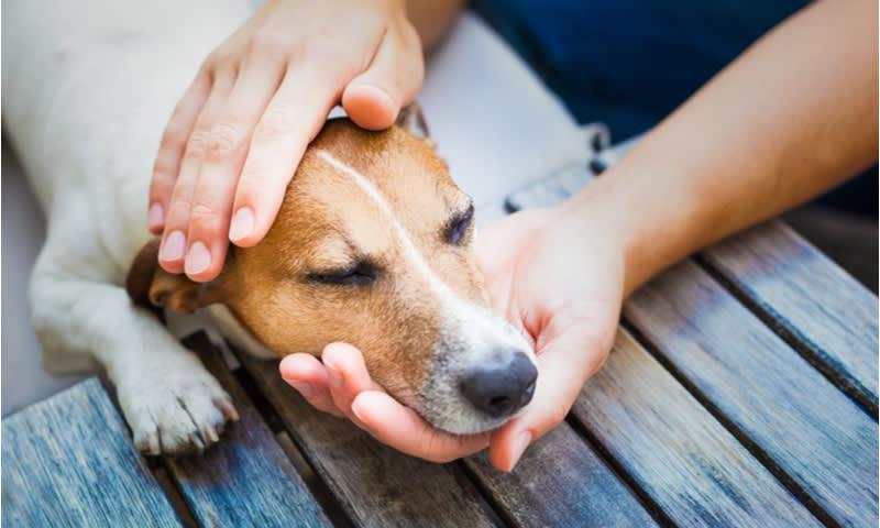 virus corona pada anjing