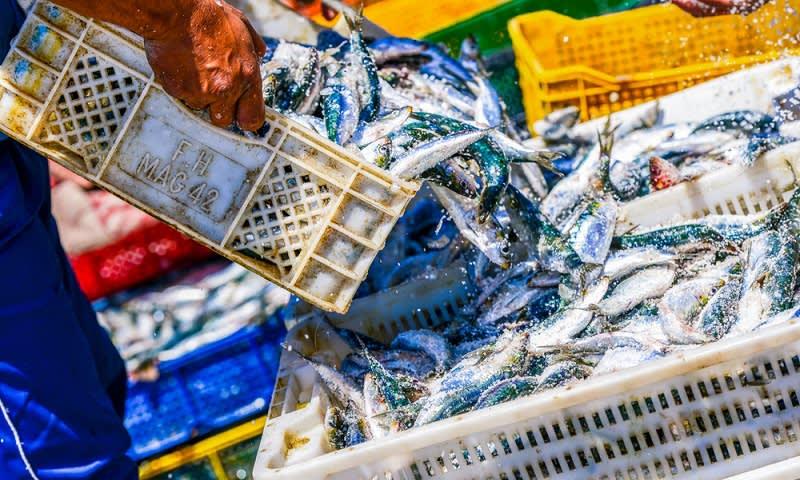 Ikan tangkap siap ekspor