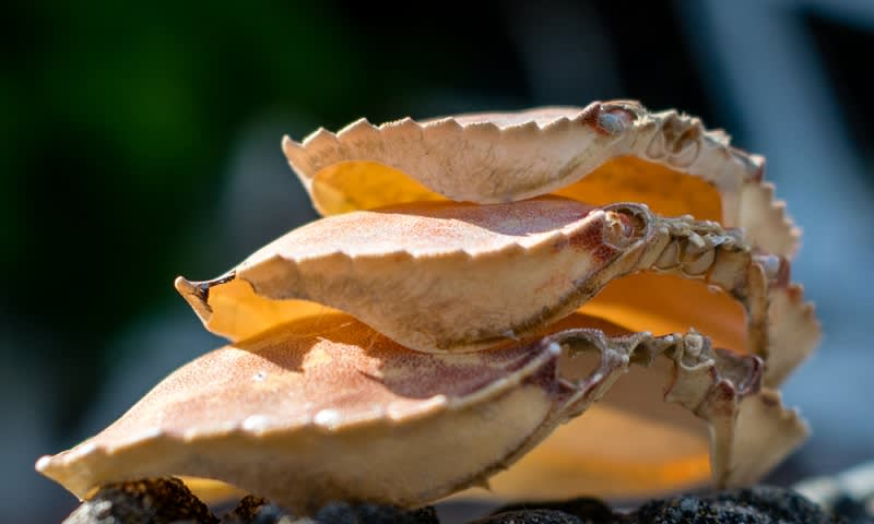 Cangkang kepiting