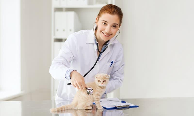 Perawatan Kucing Mahal Ini Cara Hemat Yang Bisa Dilakukan