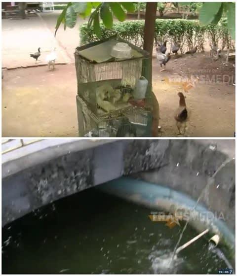 Perternakan unggas dan kolam gurame di pekarangan rumah Mandra