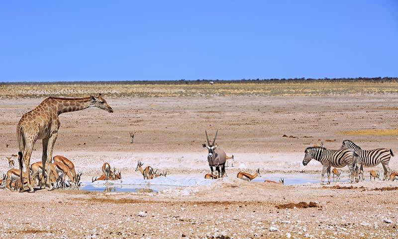 Taman Nasional Etosha untuk Wisata Alam Liar di Namibia